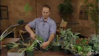 Dividing succulents|East Austin Succulents|Central Texas Gardener