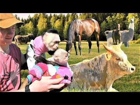 baby-monkey-sees-farm-animals-for-the-first-time!