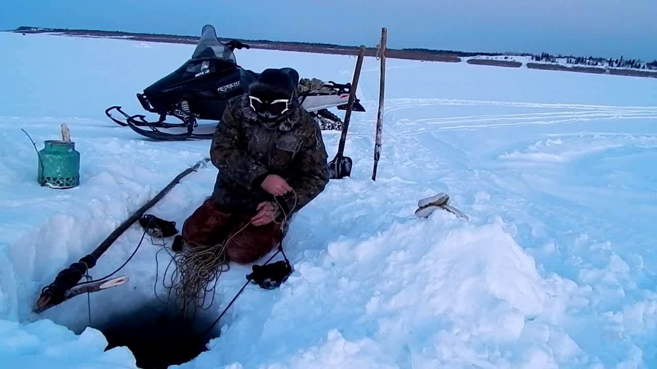 ловля хищника на севере