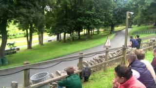 Pugfest 2014 Hill Climb Runs 1