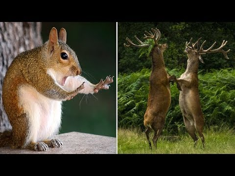 hilarious-finalists-of-the-2018-comedy-wildlife-photography-awards-|