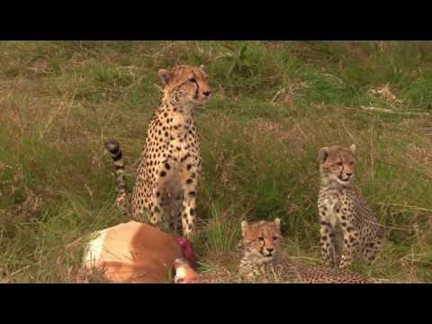 african safari honeymoon 2016