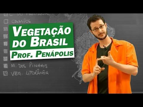 Видео PAISAGENS NATURAIS DO BRASIL CLIMA E VEGETAÇÃO