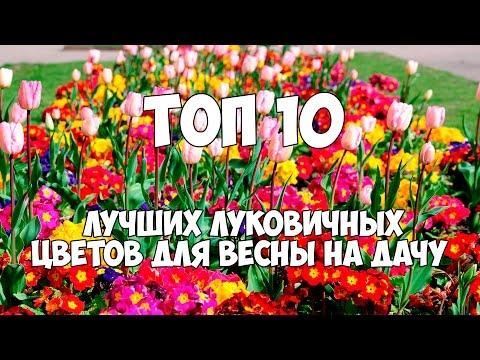 ТОП 10 лучших луковичных цветов для весны на дачу