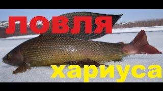 Хариус ловля. Хариус зимой. Рыбалка на хариуса.