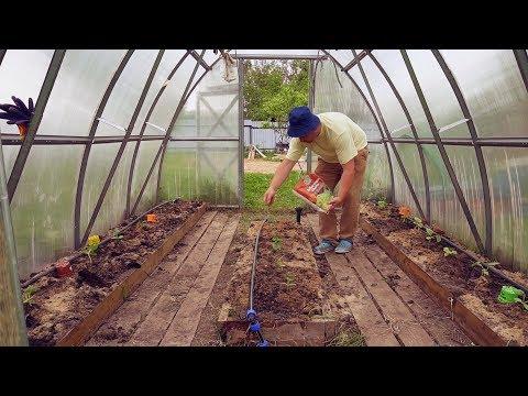 Посадка арбузов и дынь в теплицу в Подмосковье. Мой способ.