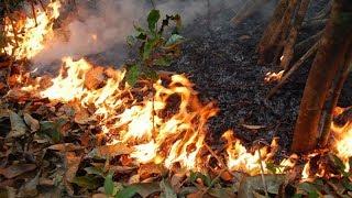Hoří Amazonský prales!