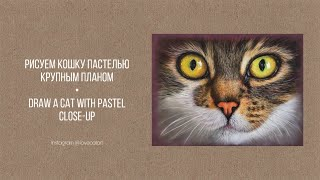 Рисуем кошку крупным планом