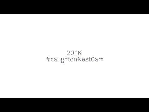 2016 #caughtonNestCam.