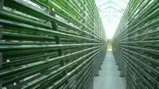 mikroAlgi - energia przyszłości z przeszłością