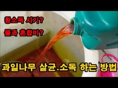 석회유황합제 황소독 하는시기 유실수 소독�