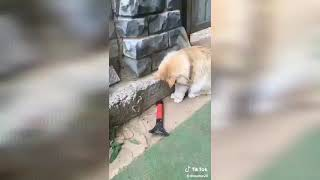dogs remix funny