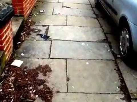 Estcourt Terrace stone pavements and kerbs