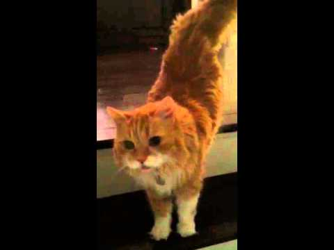 Cute Cat Gives Owner Best Welcome Home Ever