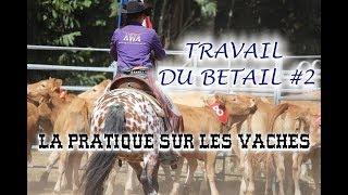 TRAVAIL DU BETAIL #2 - La Pratique sur les vaches