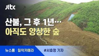 [밀착카메라] 불에 탄 나무들 그대로…아물지 않는 '상처' / JTBC 뉴스룸