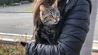 妹に抱っこされ初めて外に出てお散歩する猫