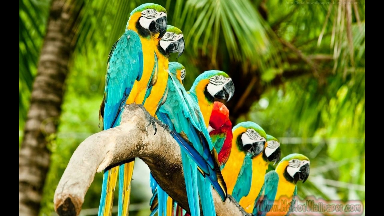 20+Parrot Wallpapers 2017 Free Download Colorful Birds HD
