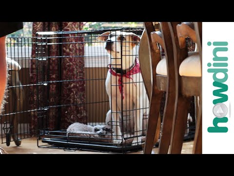How To Crate Train a Puppy – Crate Training a Puppy