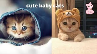 Baby cats- compilation of cute and funny cat videos