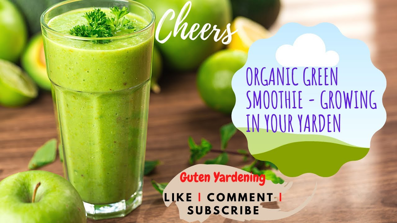 Organic Green Smoothie Mornings - Growing Healthy and Delicious Smoothie in Your Yarden Plant Based