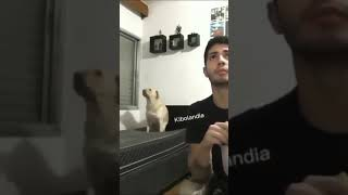 dog dancing on bed