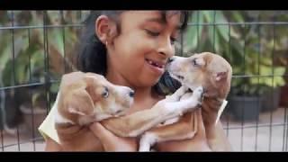 The Hub x FluffyNut Pet Adoption Drive