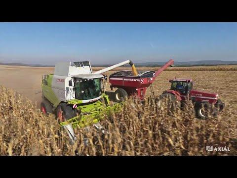 CLAAS TUCANO 580 Bemutató Körúton Kukoricában