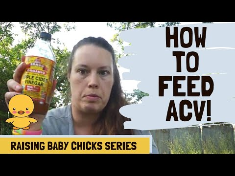 always-feed-apple-cider-vinegar-to-chickens!-here's-why.
