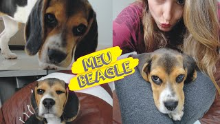 Como é Ter Um Beagle? Meu Pet   Lilian Luz