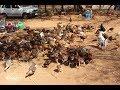 கோழி குஞ்சு விலை ரூ 45, உயிர் எடை ரூ 350 /VNM FARMS
