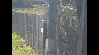 Встреча с бурундуком на даче (с песней из фильма: