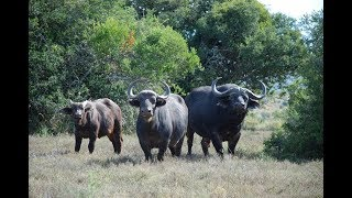 South African Hunting Safaris   Game 4 Africa