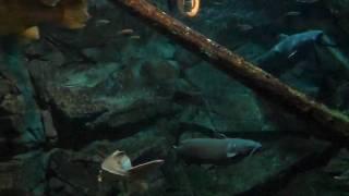 Big Fish at ECHO Lake Aquarium & Science Center