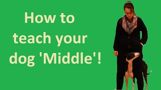 Middle! Teaching a dog to go to middle position