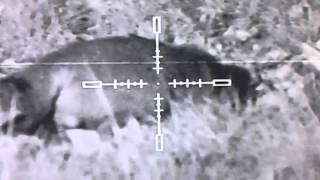 night vision foxing with the n550 digisight