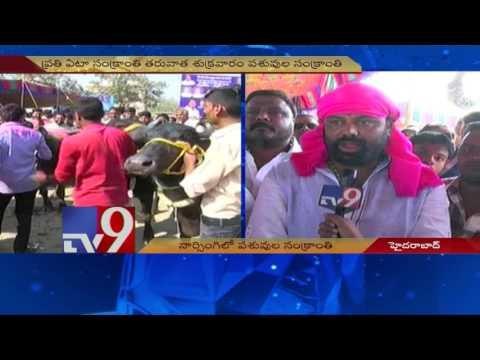 Desi Bulls steal the show in ''Animal Sankranthi'' in Hyderabad - TV9