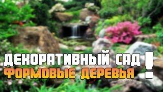 видео Декоративный сад