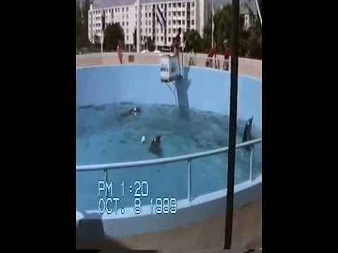 Ocean world Ft lauderdale 1989