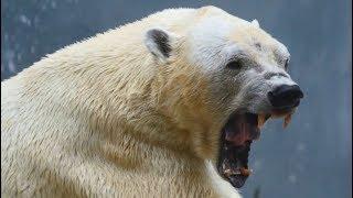 Top 10 most dangerous predatory animals