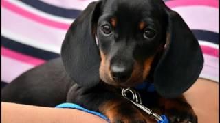 ** Dog Potty Training Tips - Awesome FREE Mini Course **