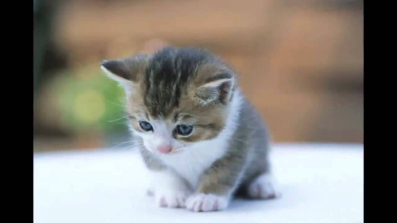 Gambar Anak Kucing Lucu Banget