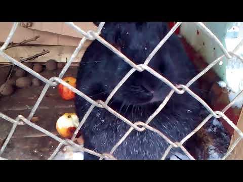 Как лечить кроликов от блох, клещей и помочь при линьке