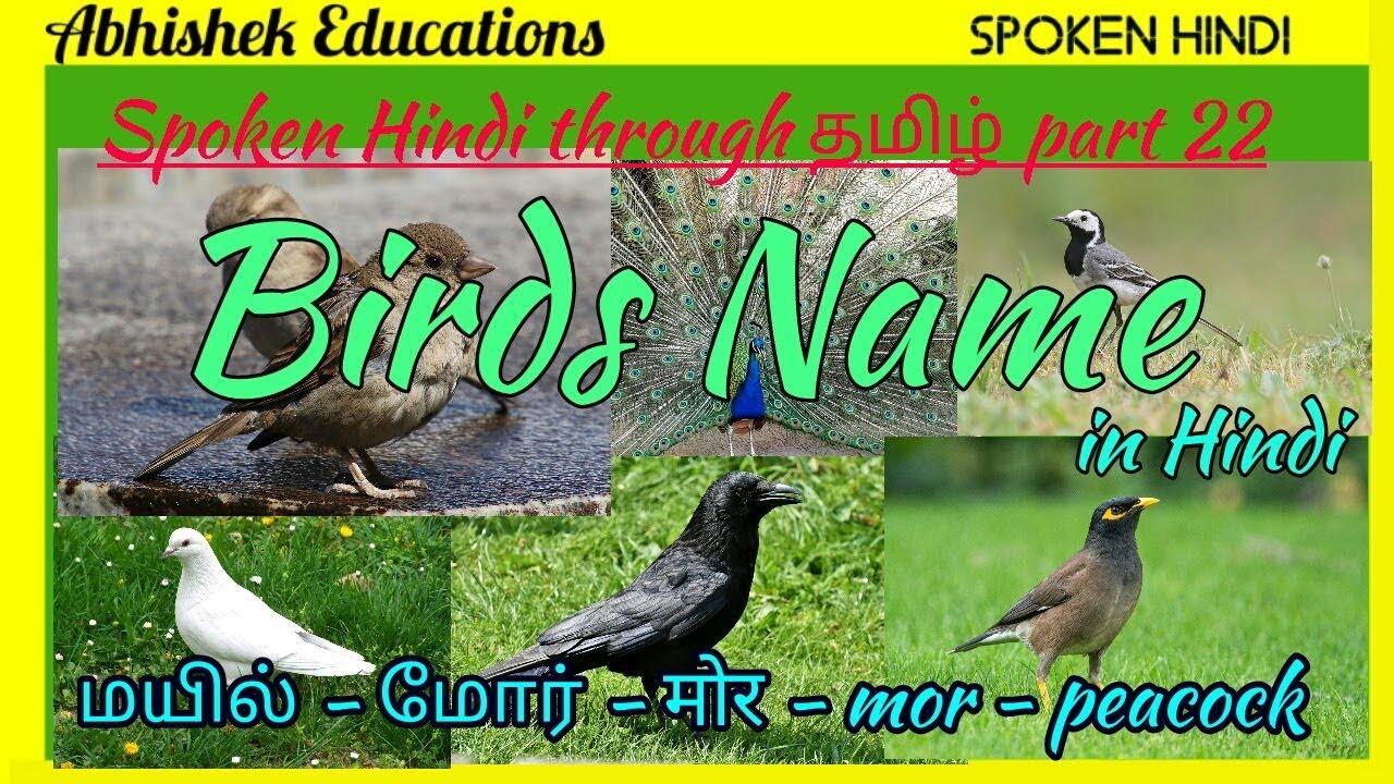 Birds Names In Hindi Through Tamil Spoken Hindi Through Tamil Part 22 Youtube