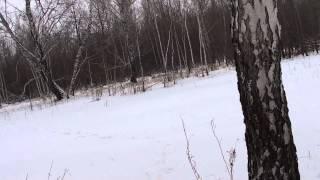 Один день из жизни русских гончих. Охота на лис.