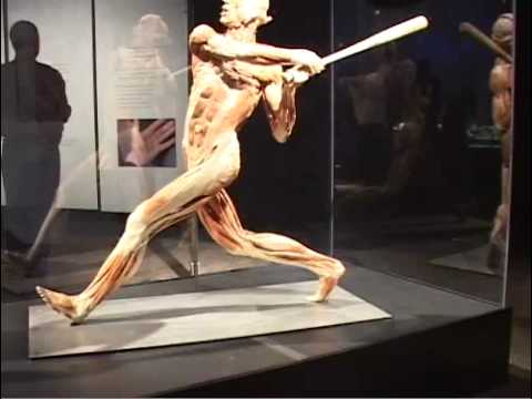 Present! - Body Worlds 2 and the Three Pound Gem