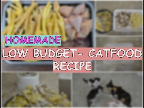 Homemade Cat Food Recipe - Low Budget!