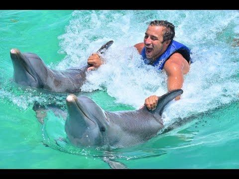Dolphin Swim in Anguilla, BWI