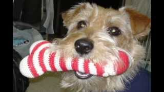 愛犬Lappyの写真を使ってペットDVDを作ってみました。