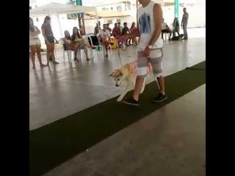 Exposição de cães de tanhaçu(7)